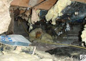 A messy crawl space filled with rotting insulation and debris in Sullivans Island.