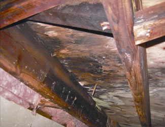 mold and rot in a Summerville crawl space