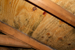 Mold growing on roof sheathing in Goose Creek attic