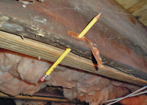 Destroyed crawl space structural wood in Cross