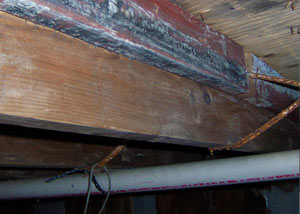 Rotting, decaying wood from mold damage in Huger